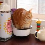7 zasad urządzania małej kuchni w bloku