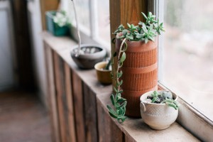 wood-light-vintage-plants