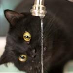 Jak oszczędzać wodę w kuchennym kranie?